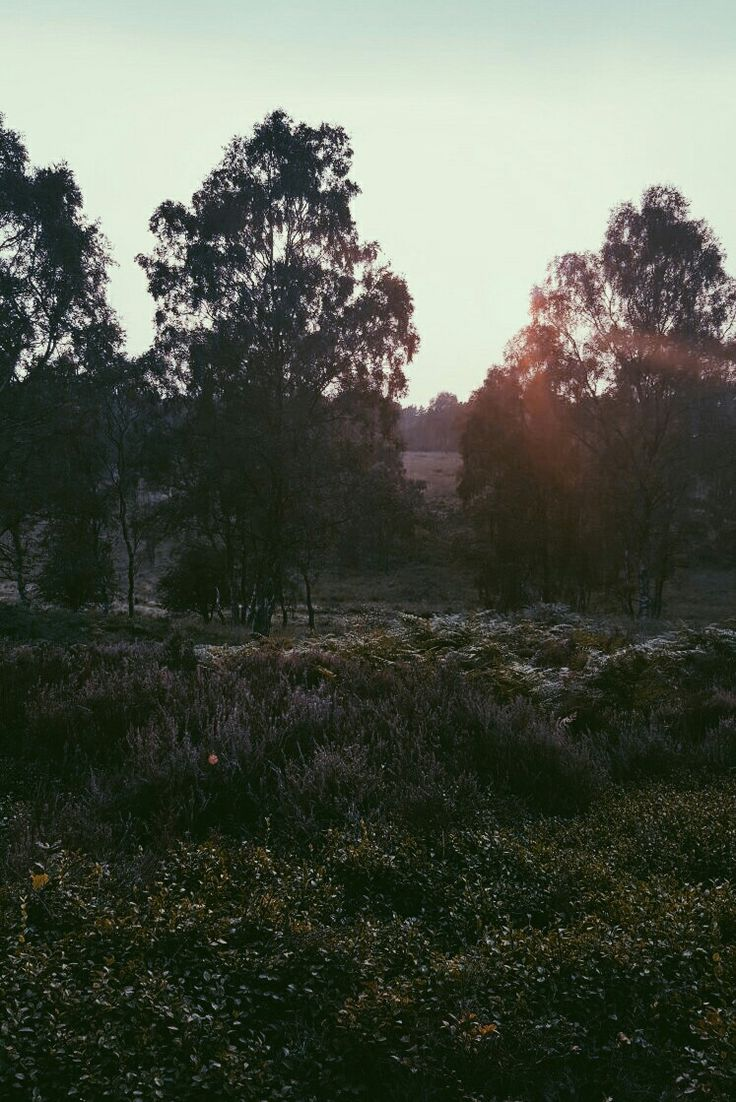 Evening in Cannock Chase. Picture edited using VSCO.