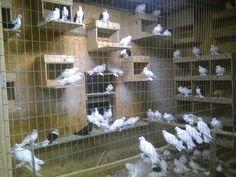 Pigeon Loft