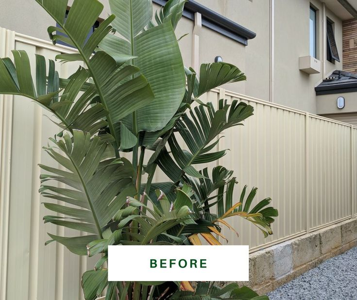 Colorbond colours don't leave us breathless. But, see this fence AFTER repaint  https://fencemakeovers.com.au