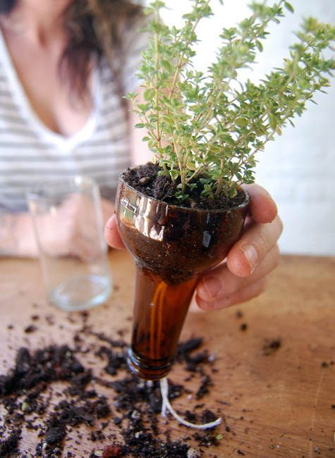 Self watering bottle planters // Perfect reuse of those beer and wine bottles! Just need someone to cut the glass.