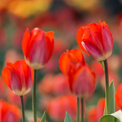These are the Best Flowers to Plant at the Beginning of Spring