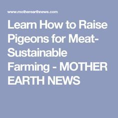 Learn How to Raise Pigeons for Meat- Sustainable Farming - MOTHER EARTH NEWS