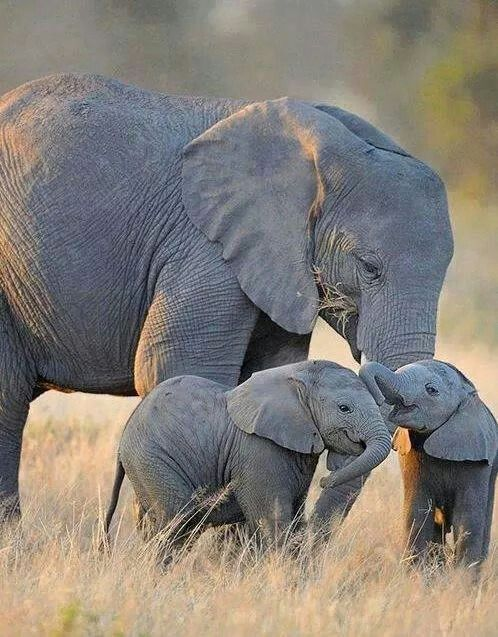 Sweet mamy elefant and babytwins