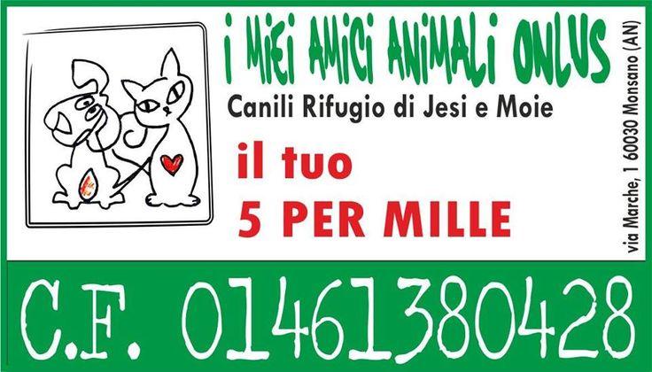 Passeggiata solidale: a 6 zampe per i canili di Jesi e di Moie :http://www.qualazampa.news/event/passeggiata-solidale-a-6-zampe-per-i-canili-di-jesi-e-di-moie/