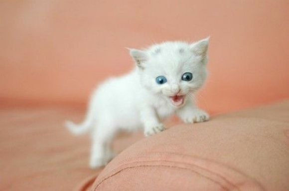 pics of the cutest white newborn kittens ever | 40 Incredibly Cute Baby Animal Pictures around the World