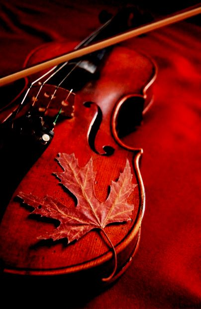 .Fall Leaves, Autumn Leaves, Red Violin, Autumn Dreams, Beautiful, Colors Palettes, Fall Cleaning, Instruments, Violin Music