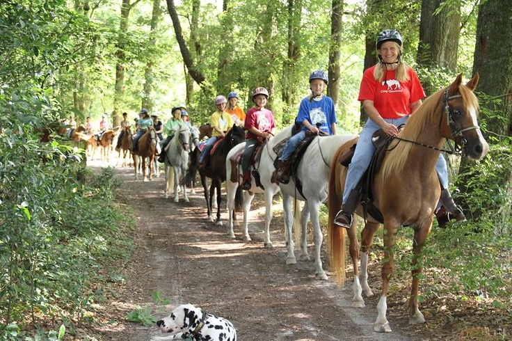 Camp Dovewood Summer Camp Pinterest Camps