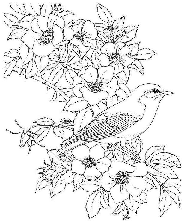Птицы контурные картинки