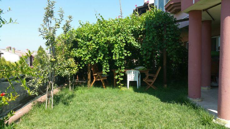 Bahçemizdeki asma çardağı tam hayal ettiğim gibi saklı bahçe tam gölgelik oldu 👍😊💙 Keyfini Rowdy sürüyor 😊 Rowdy' yi görebilen var mı!?  😉💙 #asma ##üzüm #çeşitüzüm #razaki  #çardak #asmaçardağı #bahçemizden #bahçemiz #rowdy