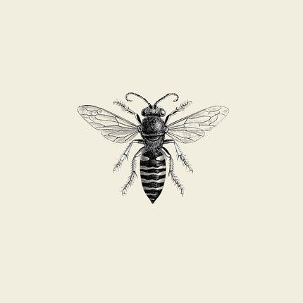 vintage honey bee // Follow me on Pinterest: @Skateboardz ☮