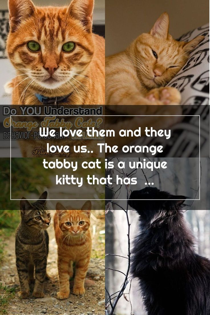 We love them and they love us.. The orange tabby cat is a