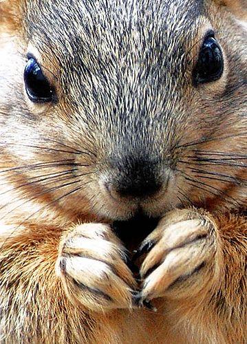 Van Truan Fox Squirrel  Pueblo, Colorado - no one in the world has ever been as happy as this squirrel is