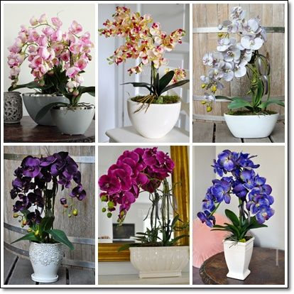 Przystań Kasi: Storczyki jak żywe! Czyli kolorowe kwiaty w naszej...