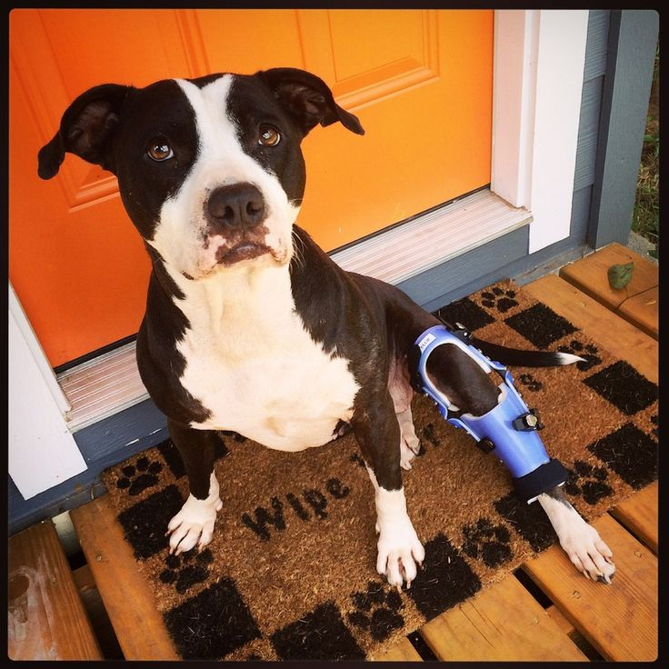 acl brace for dogs