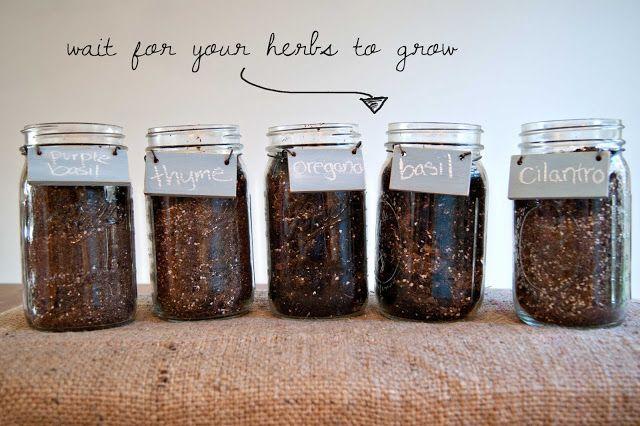 Dimples and Pig Tales: DIY Mason Jar Herb Garden