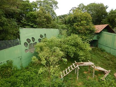 Zoológico do CIGS #viajarcorrendo #manaus #amazonia #amazonas #zoologico #zoodocigs #zoologicodocigs