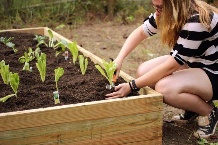 Best 25+ Cheap raised garden beds ideas on Pinterest ...