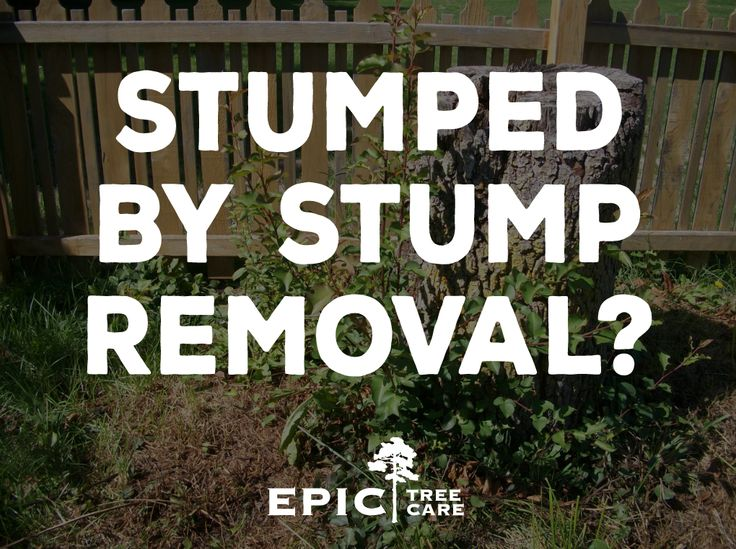 Find out more about stump grinding and stump grinders