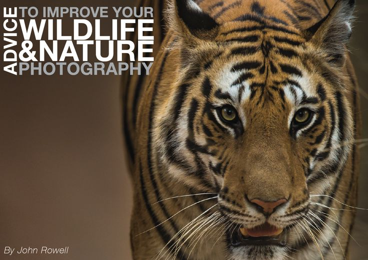 Free eBOOK with advice to improve your wildlife and nature photography.  http://www.john-rowell.com/blog/2016/9/9/free-ebook
