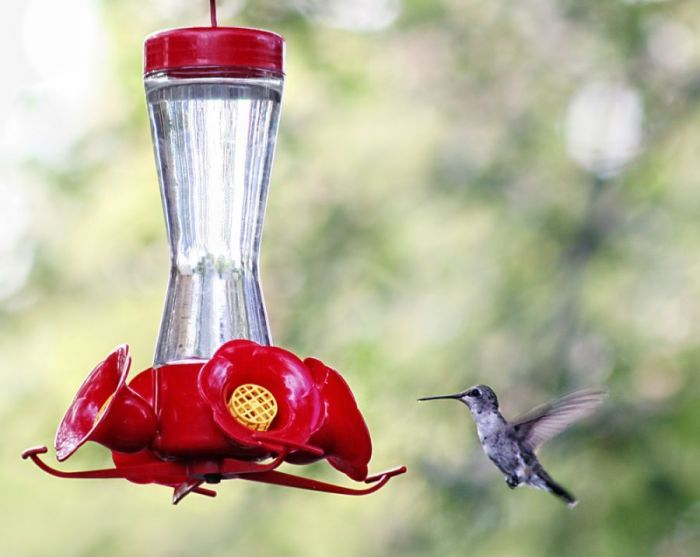 homemade hummingbird nectar...attract birds to your yard with this easy to make recipe