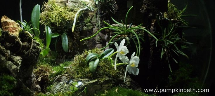 White Orchid BiOrbAir Terrarium Trial (part ten) - Pumpkin Beth