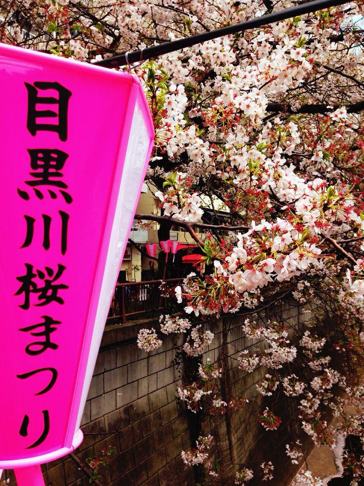目黒川 桜 中目黒 cherry blossom japan toky sakura
