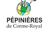 SCLERANTHUS uniflorus - Mousse tapissante - Pépinières de Corme-Royal en Charente Maritime