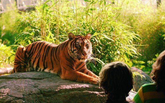 The Rotterdam Zoo or 'Diergaarde Blijdorp' as the Dutch call it, is one of Holland's biggest attractions.  #zoo #kids #Holland #Rotterdam