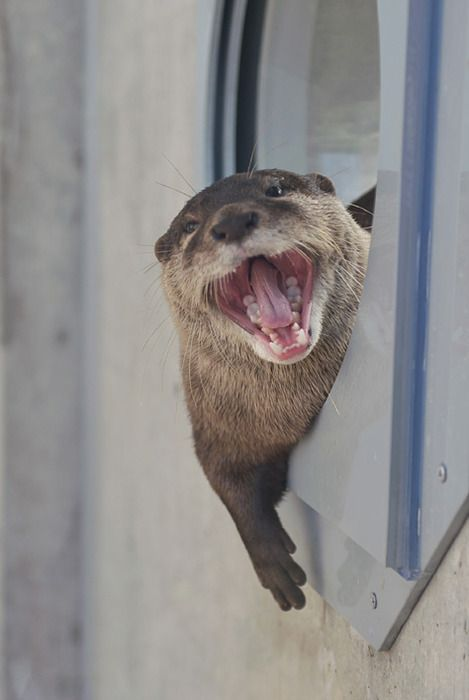 The Daily Otter