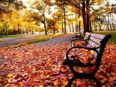 Risultati immagini per foglie in strada città