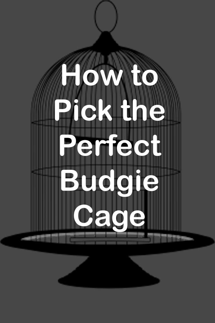 Some budgie cages look great, but make your birds miserable. Read this guide to learn how to pick the best budgie cage, so your feathered friend stays happy  #budgies #budgie #cages