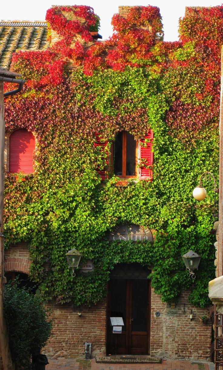 Edera rampicante sulle antiche mura a Certaldo Alto .  Ivy on the ancient walls. Certaldo hilltop town.