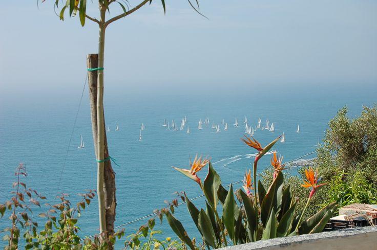 A regatta in a winter day on the Liguria sea, near Sanremo