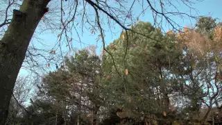 Vrijwilliger Bart Tent van Landgoed Te Werve in Rijswijk vertelt over een boom die sporen draagt van de Tweede Wereldoorlog.