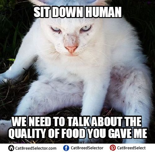 Pictures of White Cat Memes