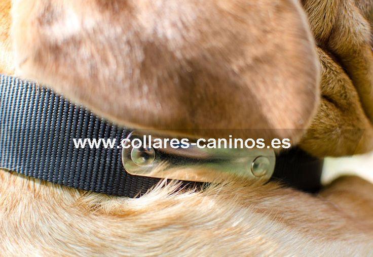Económico collar de adiestramiento nailon con chapa identificación para el nombre, teléfono o la dirección para perros Dogo de Burdeos - C42 (40 mm)
