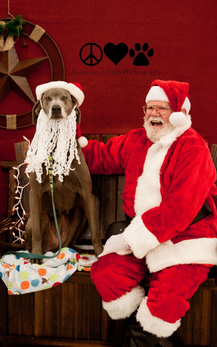 40 best we believe in santa paws images on pinterest animals