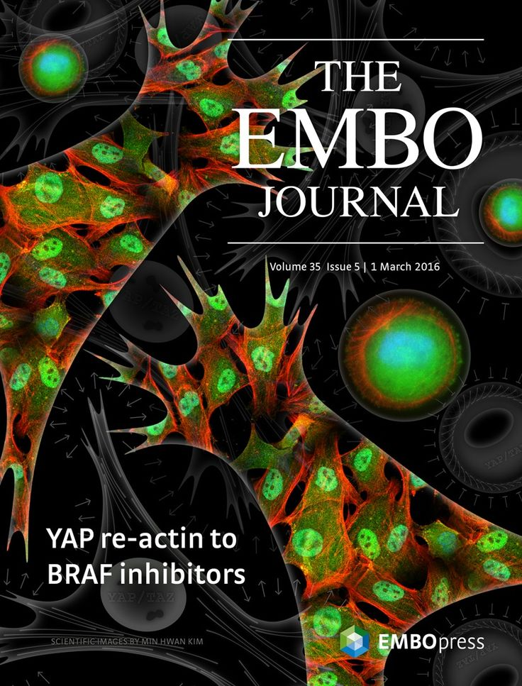 About the Cover — March 01, 2016, 35 (5) | The EMBO Journal