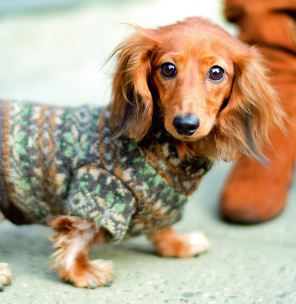 Dogs in Sweaters, courtesy of The Dogist