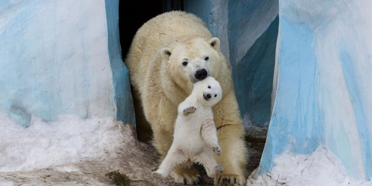 25 Of The Cutest Parenting Moments In The Animal Kingdom | Bored Panda