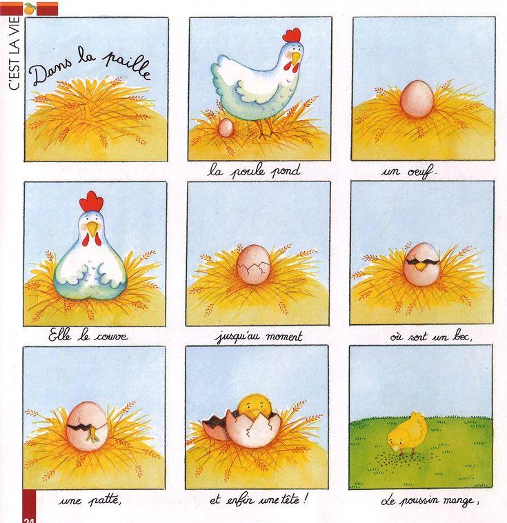De kip en het ei cyclus - de la poule à l'œuf... een proces of kringloop. de cyclus van water:water verdampt;er vormen zich wolken ;uit de wolken valt regen op de grond;het water verdant.