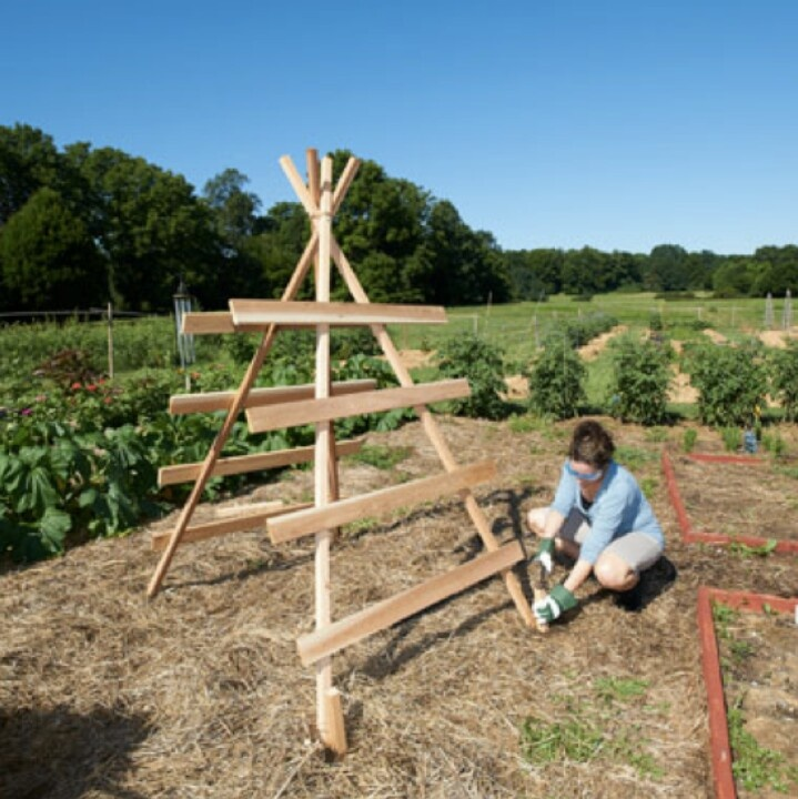 Squash tower, holds 6-7 plants