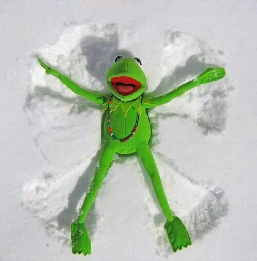 Image result for frog images in snow