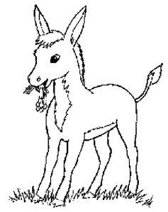donkey coloring pages for kids preschool and kindergarten - Donkey Coloring Pages