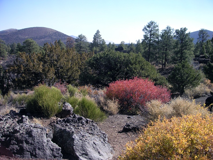 Sunset Crater: look at all the pretty flowers....