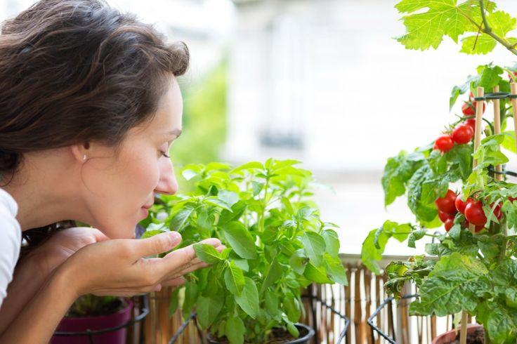 Какие овощи можно вырастить на окне и лоджии? - Ботаничка.ru