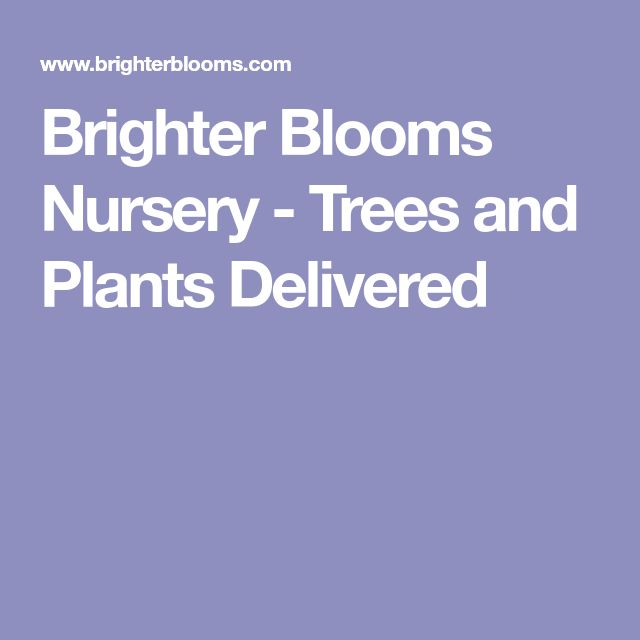 Brighter Blooms Nursery - Trees and Plants Delivered