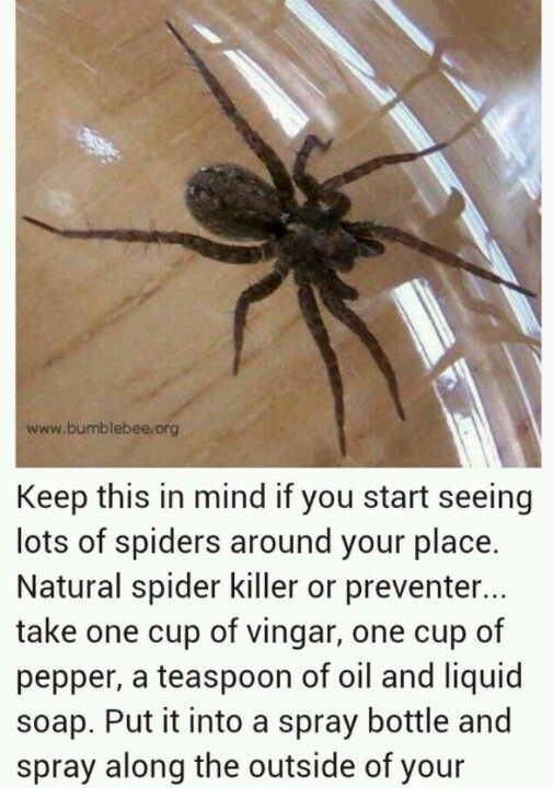 51 best bugs bites images on pinterest natural for Home remedies to get rid of spiders