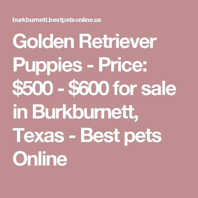Golden Retriever Puppies - Price: $500 - $600 for sale in Burkburnett, Texas - Best pets Online