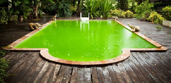 How Get Algae Out Pool Vacuum Images Clean Green
